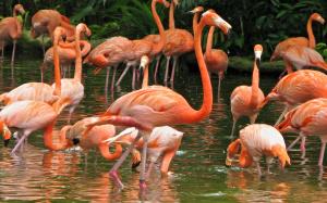 pink-flamingos-at-jurong-bird-park-311